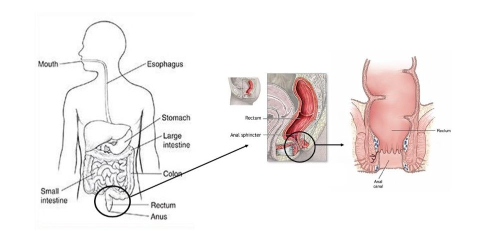 the sphincter muscle and anal sex